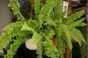 Conservar plantas y helechos