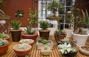 Jardinería: cuidar las plantas de los riesgos del hogar