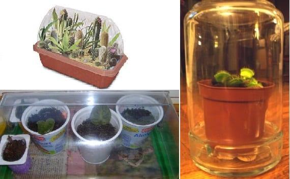 Crear y cuidar las plantas en invernaderos