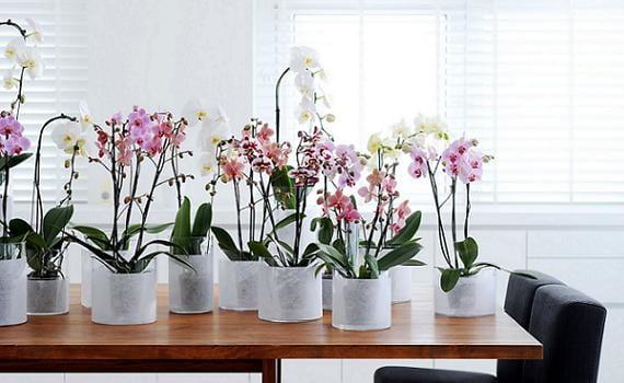 C mo mantener las plantas de interiores for Cuales son las plantas para interiores