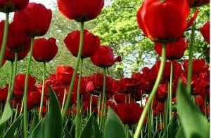 Jardinería: cómo extender la vida de las flores cortadas
