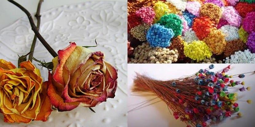 flores_secas