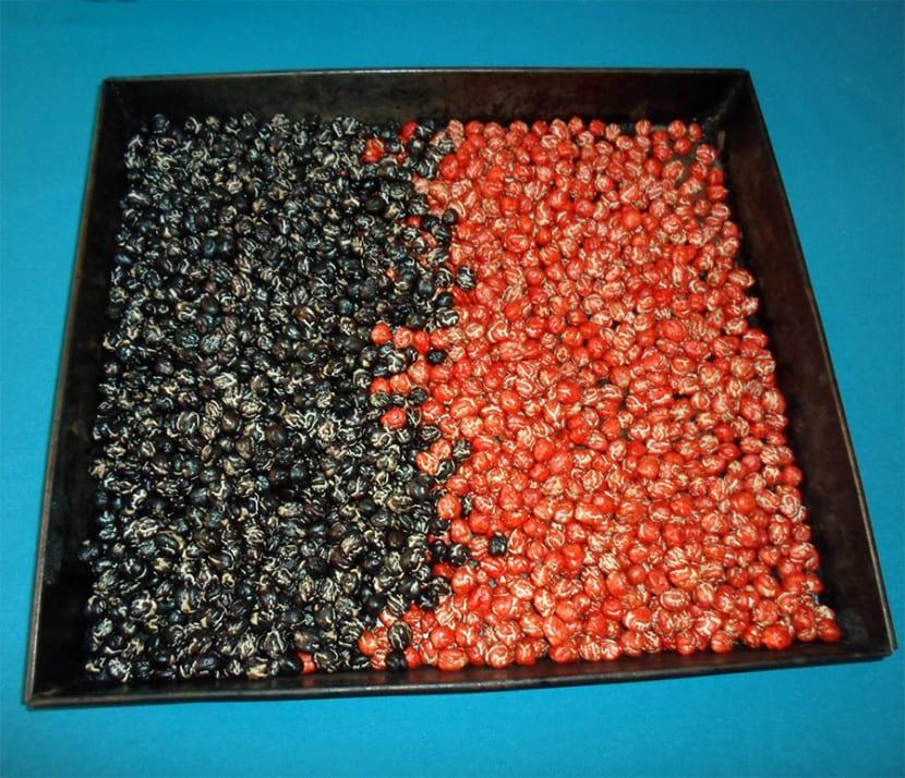 Legumbres teñidas de rojo y azul secándose