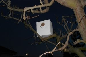 casita de pájaros en árbol, manualidades