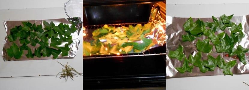 Cómo conservar hojas verdes cortadas para manualidades