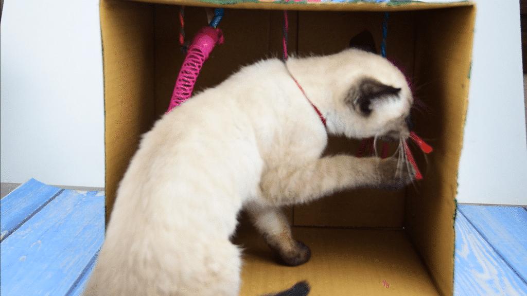 Caja con juguetes para el gato